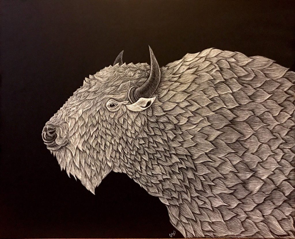 Cassandra Kassel, Buffalo, 2017, Scratchboard, 15x11 inches, $189