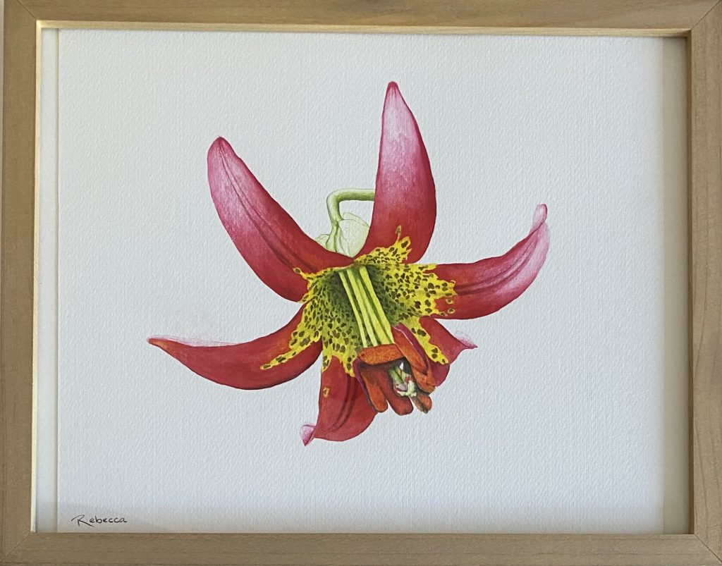 Rebecca Botelho (California), Lilium occidentale I, 2020, watercolor on paper, 11 x 13 inches, $250