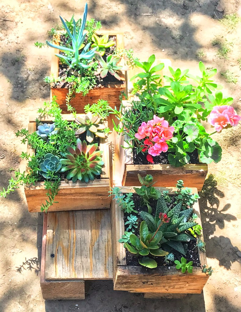 "Rogelio Valdes (Corning, Ca), ""Succulent Escape"", I chose this image because it brings me joy and gives me an escape from current isolation. Lately it's just been work, and home but through gardening me and my wife have been able to gain a sense of hope and sanity. Bright colors bring me joy as much as building something and being able to create something as small and simple as a succulent box or planting a tree is like a mini getaway. It is something that connects me to my surroundings and overall let's me appreciate what I have and reminds me of how fortunate I am during these hard times."
