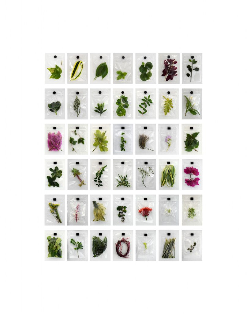 "Sarabel Santos-Negrón	(Bayamón, Puerto Rico),	""Ordenamiento Silvestre "" (Wild Ordering: Going and Return), 42 different photographs of wild plants, 17.83"" height x 14.06"", $200., An ongoing project for the arrangement and daily documentation of wild plants that I randomly select and isolate as an exercise of meditation and reflection in response to social distancing for the COVID-19 pandemic.     With this I seek to make a catalogue and a calendar of leaves, with which I keep memory of the pass of time, the fragility of life and the change of an organism when it is separated from its natural state."