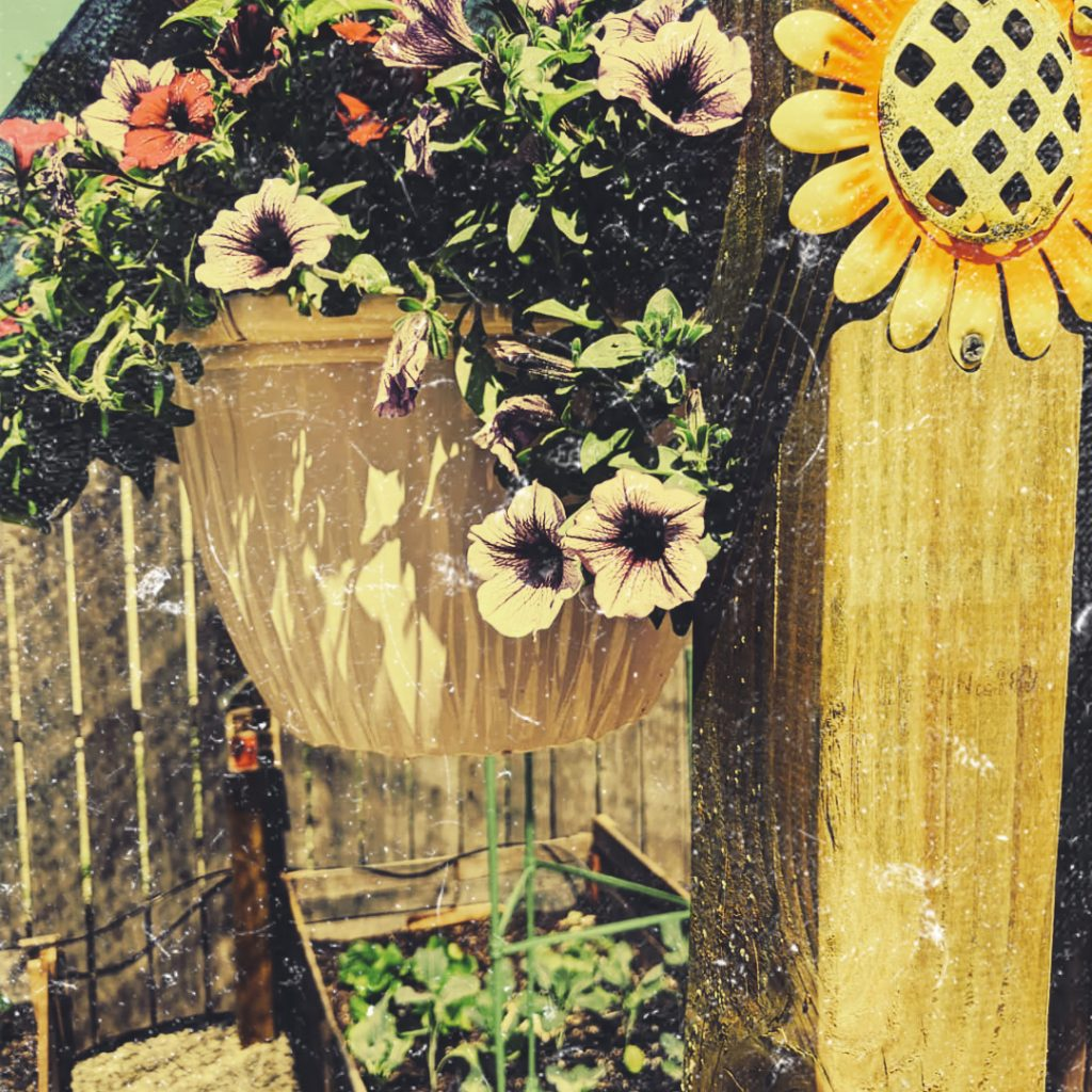 "Ashley Porter (Oroville	CA), ""Confinement or Growth?"", photograph/photoshop. NFS.  My garden has been where I have been spending most of my spare time since this all began. I created two raised beds with many veg and fruits and it has been a labor of love. Being out of doors, moving earth and watching my plants grow is a very large part of how I am navigating through this crisis. Being in my garden quiets my mind and I often just sit or stand somewhere around our place and just admire it. While I am confined to my home, that does not restrain my ability to grow. My garden is wonderful proof of this."