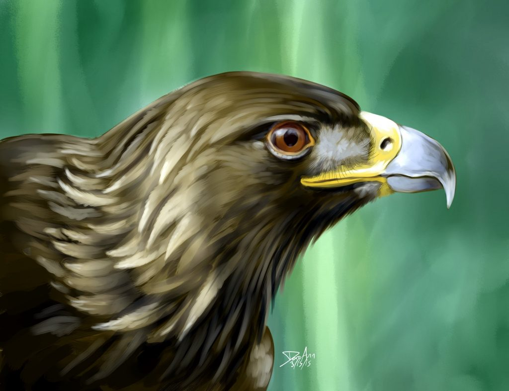 Dory Schachner, Golden Eagle, 2015, digital painting, 11x17, $50/print