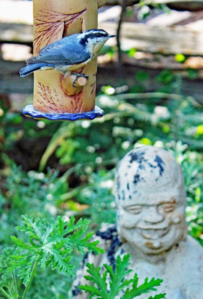 Carolyn McLeod, Red Breasted Nuthatch and Laughing Buddha (Budai), 2020, Photograph, 24x16, $200