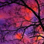 Nick_StainGlassSunset, Photo,12x20 $86.00